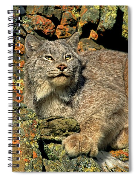Canadian Lynx On Lichen-covered Cliff Endangered Species Spiral Notebook