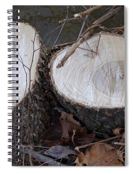Canal Stumps-004 40 Rings Spiral Notebook