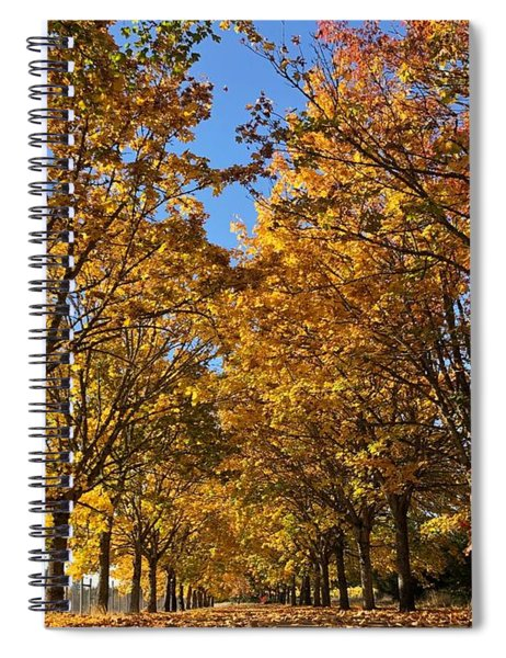Canopy Of Color Spiral Notebook