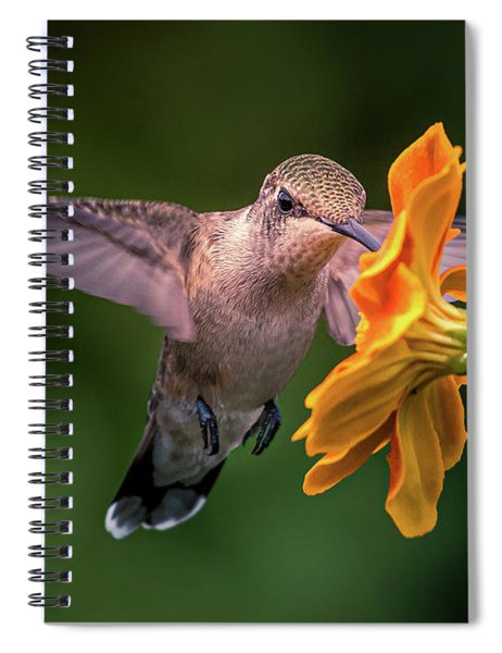 Capturing The Moment Spiral Notebook by Allin Sorenson