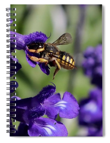 Carder Bee On Salvia Spiral Notebook
