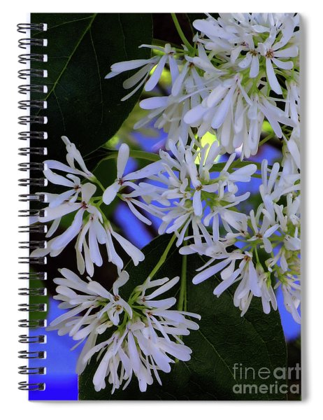 Carly's Tree - The Delicate Grow Strong Spiral Notebook