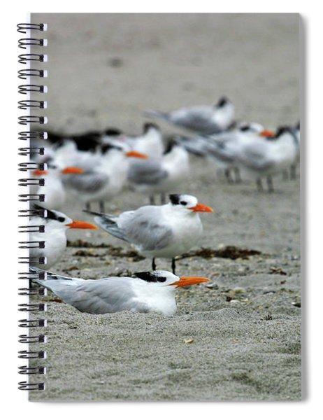Caspian Terns Spiral Notebook
