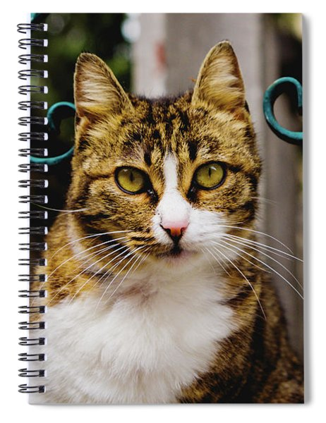 Cat On A Fence Spiral Notebook