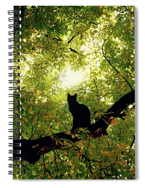 Cat On A Tree Spiral Notebook