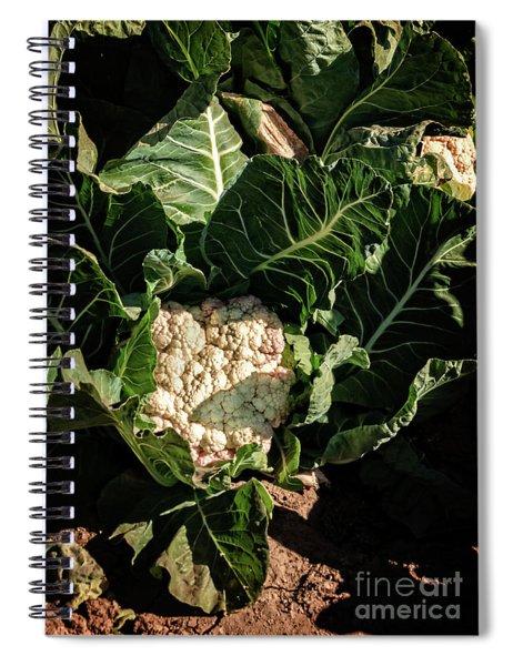 Cauliflower Ready For Harvest Spiral Notebook