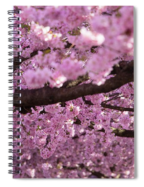 Cherry Blossom Tree Panorama Spiral Notebook