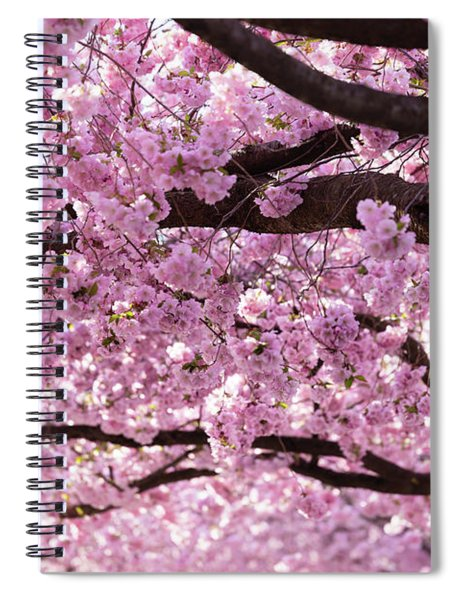 Cherry Blossom Trees Spiral Notebook