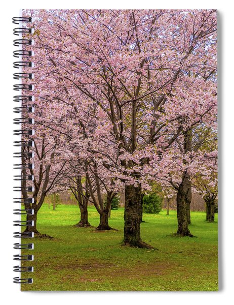 Cherry Blossoms 2 Spiral Notebook