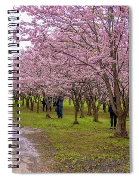 Cherry Blossoms 3 Spiral Notebook