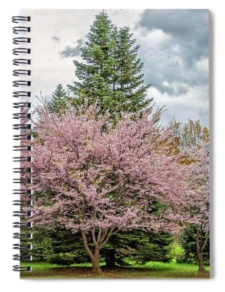Cherry Blossoms 4 Spiral Notebook