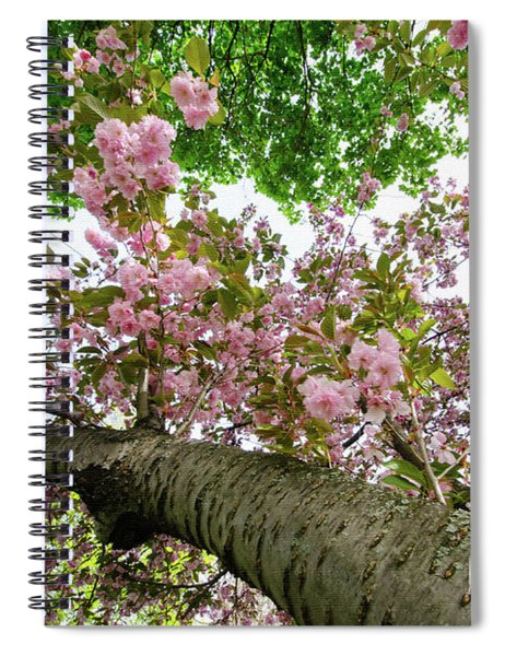 Cherry Blossoms Flowers Spiral Notebook