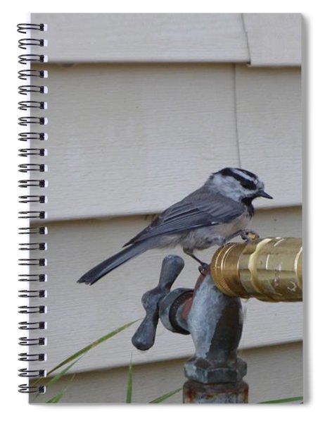 Chickadee On A Spigot Spiral Notebook