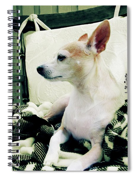 Chihuahua  Portrait  Spiral Notebook