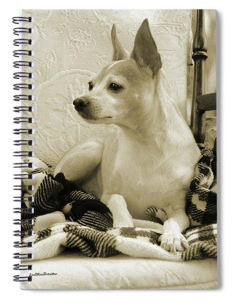 Chihuahua Chiqui  Portrait  Spiral Notebook