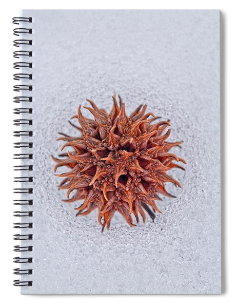Chilly Sweetgum Spiral Notebook