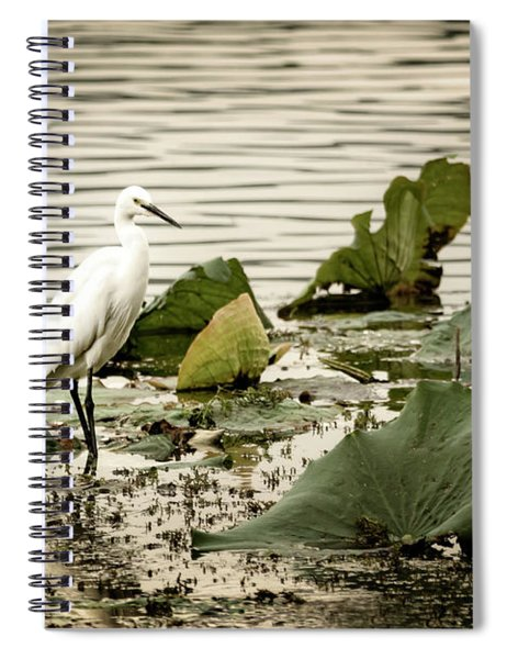 Chinese Egret Spiral Notebook