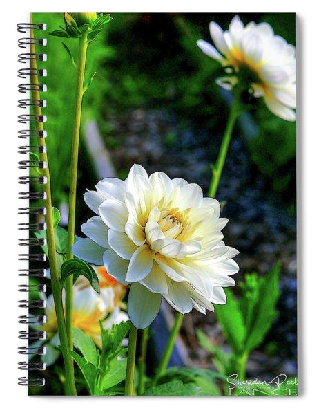 Chrysanthemum In Bloom Spiral Notebook