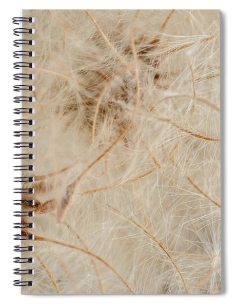 Clematis Seed Pods Spiral Notebook