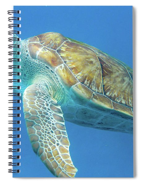 Close Up Sea Turtle Spiral Notebook