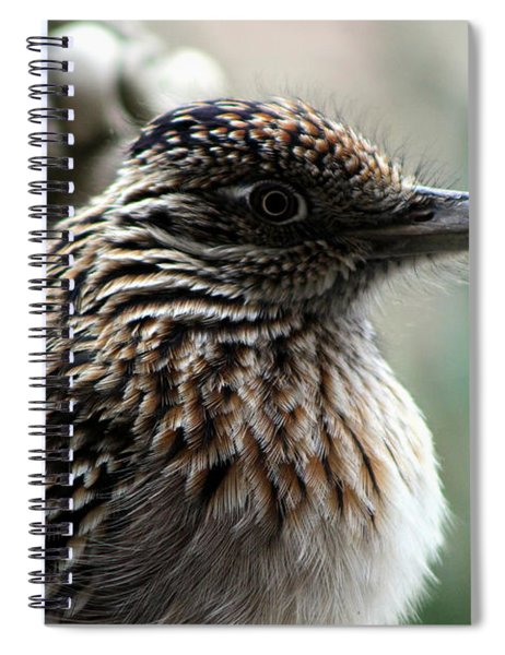 Closeup Of Road Runner By Dragon In Palm Desert Spiral Notebook