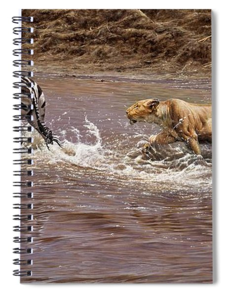 Closing In - Lion Chasing A Zebra Spiral Notebook by Alan M Hunt