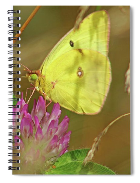Clouded Sulfur Butterfly Spiral Notebook