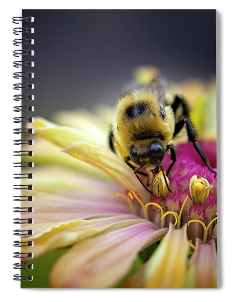Collection Spiral Notebook