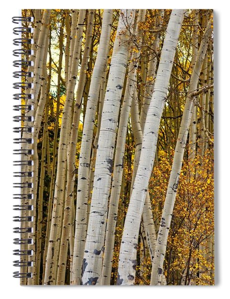 Colorado Aspens Spiral Notebook