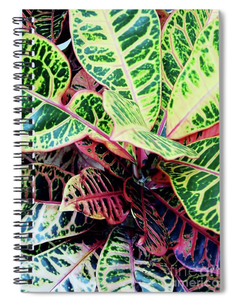 Colorful - Croton - Plant Spiral Notebook
