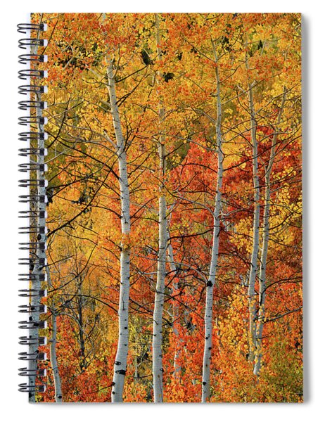 Colorful Glow Of Autumn Spiral Notebook