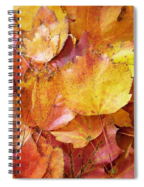 Colors Of Fall - Red To Yellow Spiral Notebook