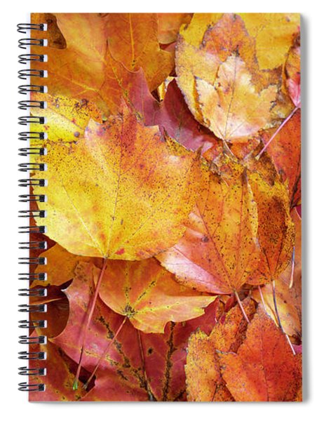 Colors Of Fall - Yellow To Red Spiral Notebook