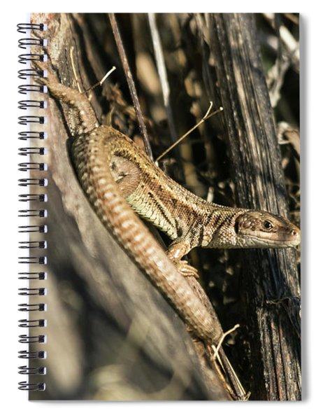Common Lizard Spiral Notebook