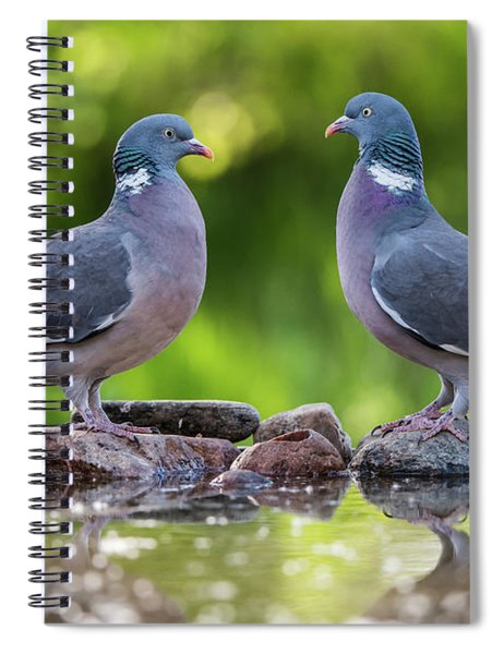 Common Wood Pigeons Meeting At The Waterhole Spiral Notebook