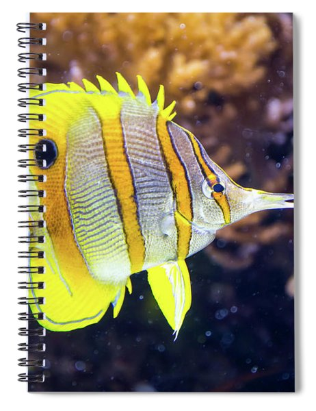 Copperband Butterfly Fish Spiral Notebook