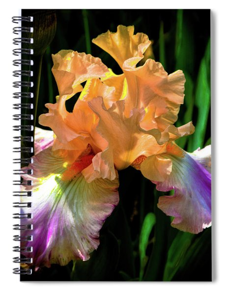 Coral And Purple Iris Spiral Notebook
