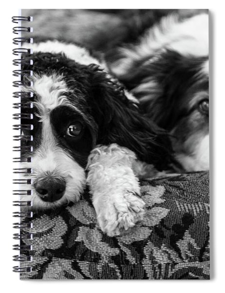Couch Potatoes Spiral Notebook