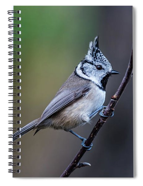 Crested Tit On A Twig Spiral Notebook