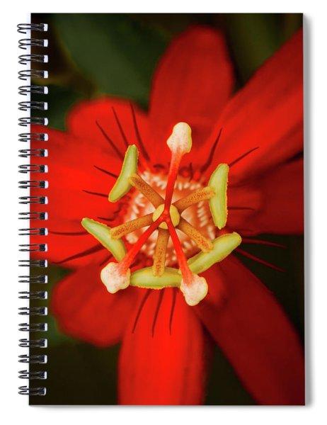 Crimson Beauty Spiral Notebook