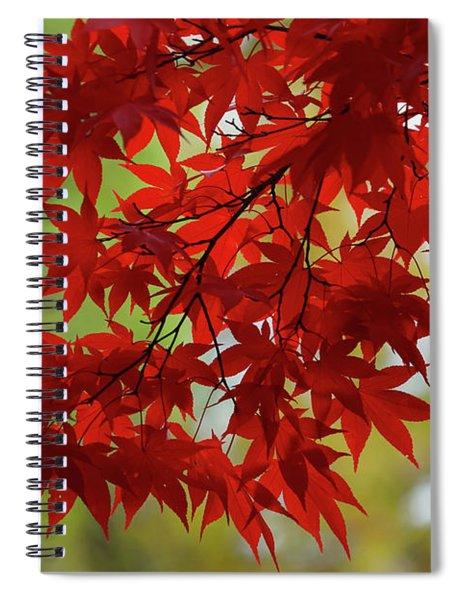 Crimson Queen Delight 2 Spiral Notebook