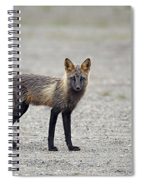Cross Fox In Alaska Spiral Notebook