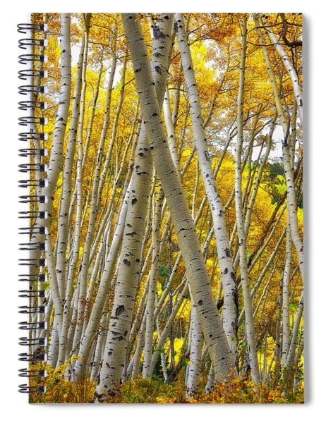 Crossed Aspens Spiral Notebook