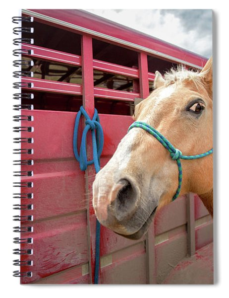 Curious Horse Spiral Notebook