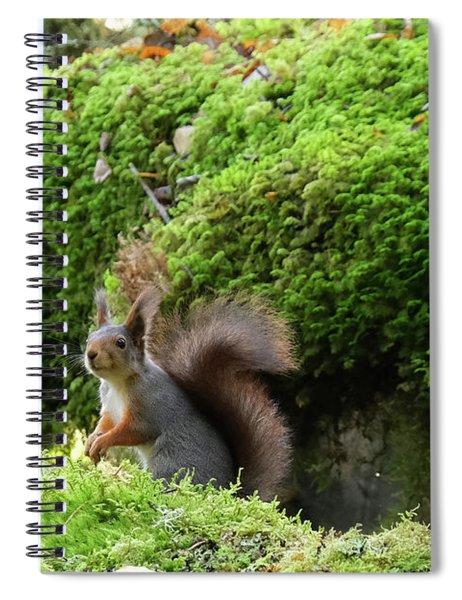 Curious Squirrel Spiral Notebook