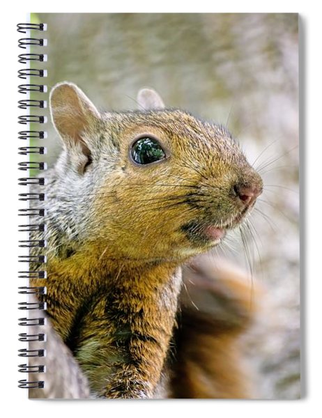 Cute Funny Head Squirrel Spiral Notebook