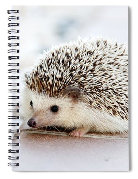 Cute Hedgeog Spiral Notebook