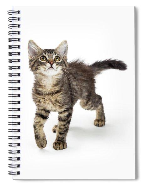Cute Kitten Walking Forward Looking Up Spiral Notebook