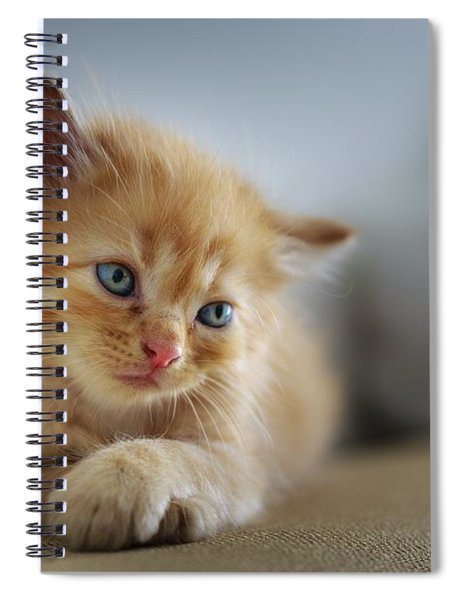 Cute Orange Kitty Spiral Notebook