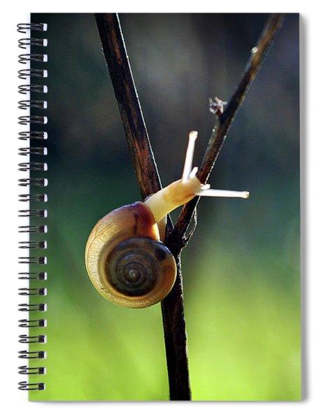 Cutie Pie Spiral Notebook